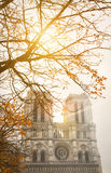 Notre Dame Cathedral, Paris, with autumn sunshine through the branches of a tree Royalty Free Stock Photos