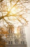 Notre Dame Cathedral, Paris, com luz do sol do outono através dos ramos de uma árvore Fotos de Stock Royalty Free