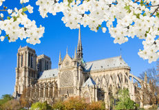 Notre Dame cathedral, Paris, France Royalty Free Stock Photo