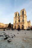 Notre Dame Cathedral in Paris, France. Pigeons and tourists in front of Notre Dame Cathedral in Paris, France Stock Photos