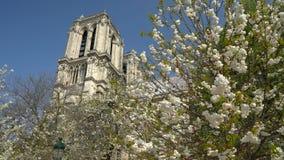 Notre Dame Cathedral rodeó por los árboles de florecimiento metrajes