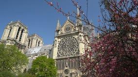 Notre Dame Cathedral rodeó por los árboles de florecimiento almacen de video