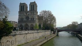 Notre Dame Cathedral rode? por los ?rboles de florecimiento almacen de video