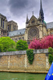 Notre Dame Cathedral, flower trees in spring. The iconic Notre Dame de Paris in Paris France is radiant with the cherry trees flowering to full bloom. This view Royalty Free Stock Image