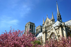 Notre-Dame Cathedral in Spring Royalty Free Stock Photos