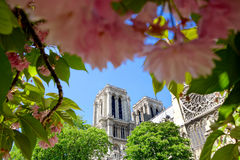 Notre Dame cathedral in spring time, Paris, France Stock Images