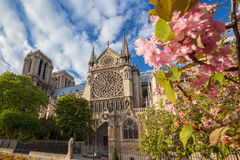 Notre Dame cathedral during spring time in Paris, France. Famous Notre Dame cathedral during spring time in Paris, France royalty free stock photos
