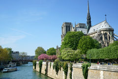 Notre Dame Cathedral in Spring Stock Photos