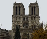 Notre Dame at Christmas. Stock Images