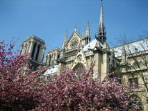 Notre Dame De Paris Royaltyfria Bilder