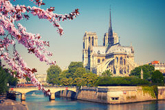 Notre Dame de Paris bij de lente Royalty-vrije Stock Afbeelding