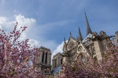 Notre-Dame de Paris on bright sunny day during cherry blossom season. Ancient catholic cathedral in Paris, France. Famous touristic places and romantic travel Stock Photo