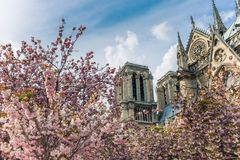 Notre-Dame de Paris on bright sunny day during cherry blossom season. Ancient catholic cathedral in Paris, France. Famous touristic places and romantic travel Royalty Free Stock Images