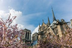 Notre-Dame de Paris on bright sunny day during cherry blossom season. Ancient catholic cathedral in Paris, France. Famous touristic places and romantic travel Stock Images