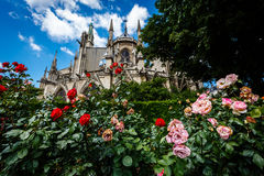 Notre Dame de Paris Cathedral with Red and White Roses Royalty Free Stock Photography