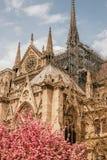 Notre-Dame de Paris della cattedrale immagine stock