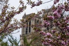 Notre-Dame de Paris, Parijs stock fotografie