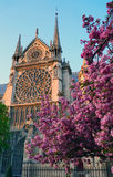 Notre - Dame de Paris in the sping Royalty Free Stock Images