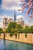 Notre Dame de Paris. At spring, France Royalty Free Stock Photo