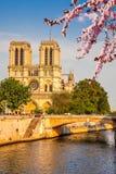 Notre Dame de Paris. At spring, Paris, France Royalty Free Stock Photo