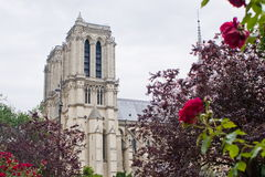 Notre-Dame de Paris. View of Notre-Dame Cathedral from nearby gardens Royalty Free Stock Photos
