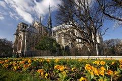 Notre Dame de Paris y flores amarillas Foto de archivo libre de regalías