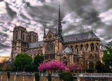 Notre-Dame losu angeles magnifique Obrazy Royalty Free
