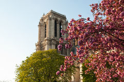 Notre-Dame of Paris cathedral Royalty Free Stock Photo