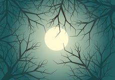 Notte asciutta del cielo della luce di luna della giungla dell'albero dei ramoscelli nel fondo di vettore di festival di celebraz Immagine Stock