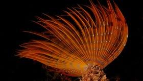 Notte degli invertebrati Fotografia Stock