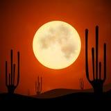 Notte dei cactus della sabbia illustrazione di stock