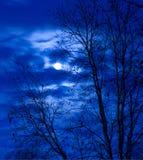 Notte del cacciatore Fotografia Stock Libera da Diritti