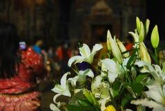 Notte del fiore del giglio in Tailandia Fotografia Stock