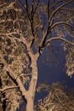 Notte del paesaggio di inverno Immagini Stock Libere da Diritti