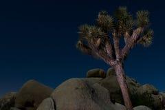 Notte dell'albero di Joshua Fotografie Stock