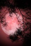 Notte della luna piena Fotografie Stock Libere da Diritti