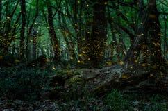 Notte delle lucciole nella foresta con le lucciole Fotografia Stock Libera da Diritti