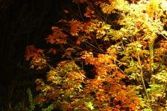 Notte di autunno Immagine Stock