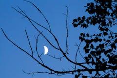 Notte di estate Fotografia Stock