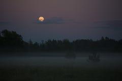 Notte di estate nebbiosa Fotografia Stock Libera da Diritti