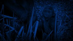 Notte di Gorilla Eating By Mother At del bambino video d archivio