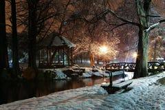 Notte di inverno nel parco Immagine Stock
