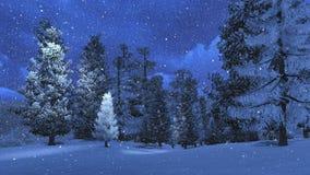 Notte di inverno nel pino nevoso Fotografia Stock