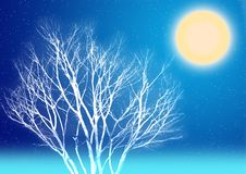 Notte di luce della luna di inverno Fotografie Stock