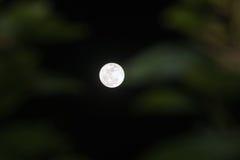 Notte di luce della luna ed ombra del ` s dell'albero Fotografie Stock Libere da Diritti