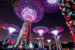 Notte di Supertree Singapore Immagine Stock Libera da Diritti