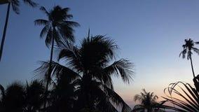 Notte e palme stock footage