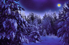 Notte illuminata dalla luna in legno nevoso Immagine Stock