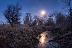 Notte insolita della luna piena con i silhoettes degli alberi e della canna Immagine Stock
