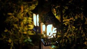 Notte, le piccole lanterne splendono nei cespugli, la piccola luce solare del giardino, lanterne nel letto di fiore Disegno del g video d archivio